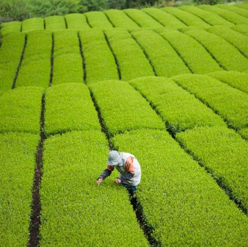 Inti Zen In_T Organics
